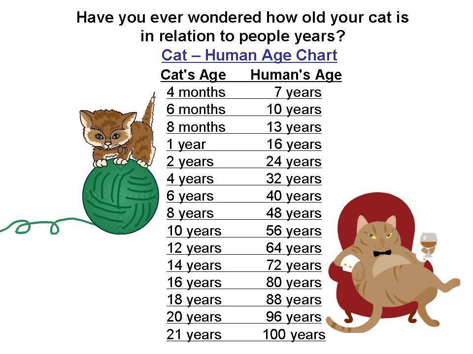 Cara PATEN Membuat Kucing Gemuk Lucu