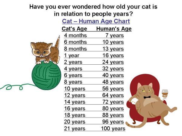 Persamaan Umur Kucing dengan Umur Manusia